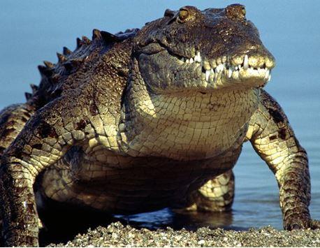 Người đàn ông bị cá sấu đoạt mạng khi đi câu cá - Ảnh 1.