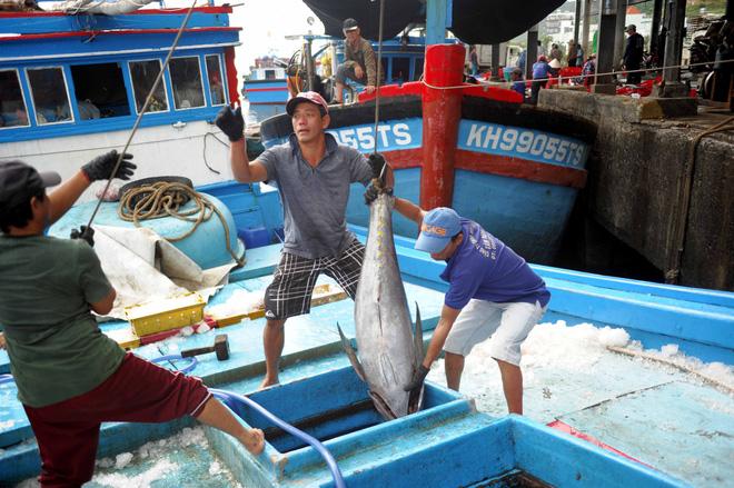 Về vùng quê của những tỷ phú cá ngừ  - Ảnh 1.