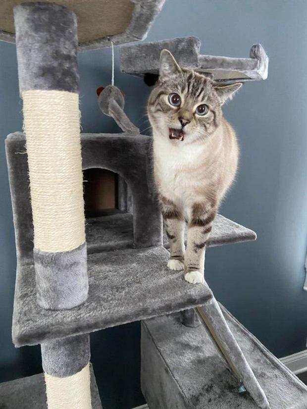 Boss thích gặm chân: Nỗi đau khổ của người nuôi mèo, đáng yêu thật đấy nhưng mà... đau thôi rồi và đây là cách để giải quyết - Ảnh 6.
