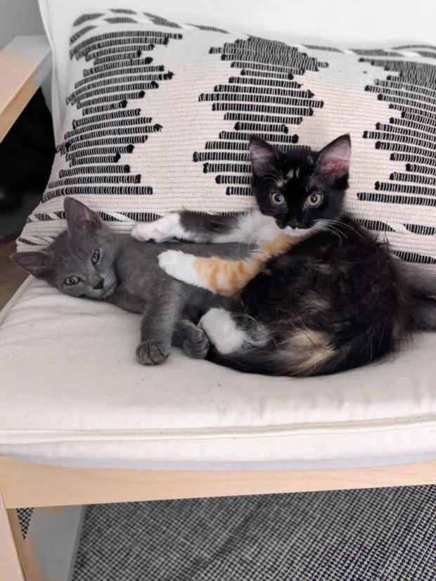 Boss thích gặm chân: Nỗi đau khổ của người nuôi mèo, đáng yêu thật đấy nhưng mà... đau thôi rồi và đây là cách để giải quyết - Ảnh 8.