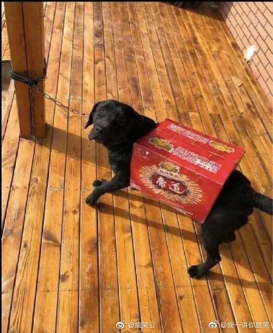 Lấy tiền mua đồ cho thú cưng của vợ đi uống rượu, người chồng đã làm ra một việc khiến dân mạng cười xỉu vì độ láu cá - Ảnh 3.