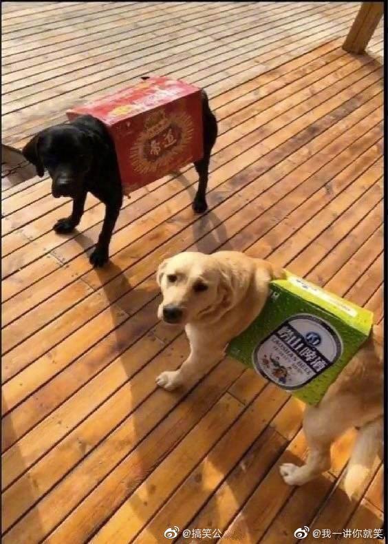 Lấy tiền mua đồ cho thú cưng của vợ đi uống rượu, người chồng đã làm ra một việc khiến dân mạng cười xỉu vì độ láu cá - Ảnh 4.