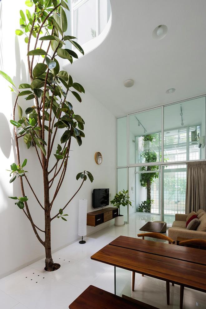 Gia đình trẻ ở Sài Gòn sống trong căn nhà 42m2 có giếng trời chữ D uốn cong cực đã, càng lên cao càng phải trầm trồ - Ảnh 3.