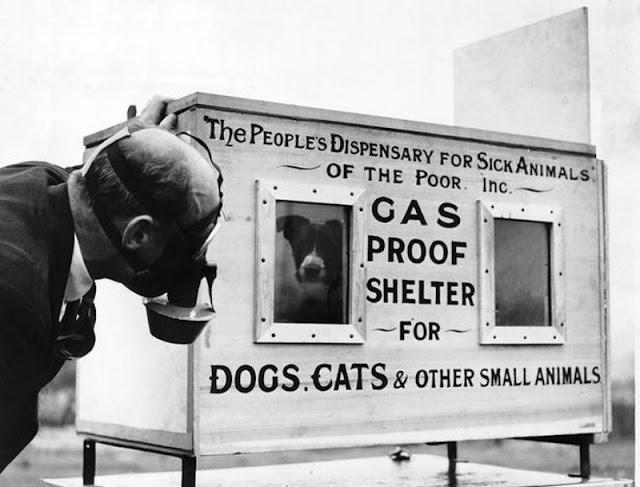 Vụ tàn sát thú cưng kinh hoàng nhất lịch sử nhân loại: 750.000 chó mèo bị lấy mạng vì 1 lý do ngu ngốc - Ảnh 3.