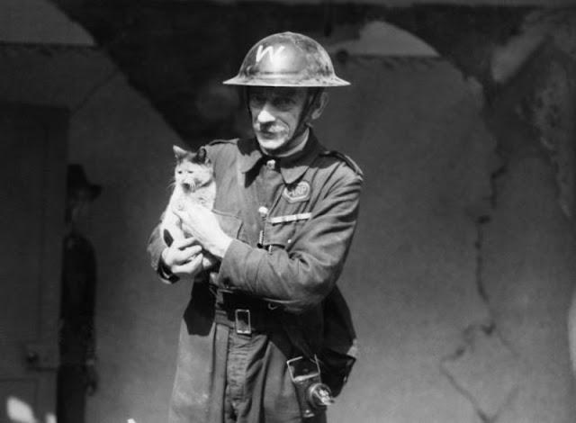 Vụ tàn sát thú cưng kinh hoàng nhất lịch sử nhân loại: 750.000 chó mèo bị lấy mạng vì 1 lý do ngu ngốc - Ảnh 6.