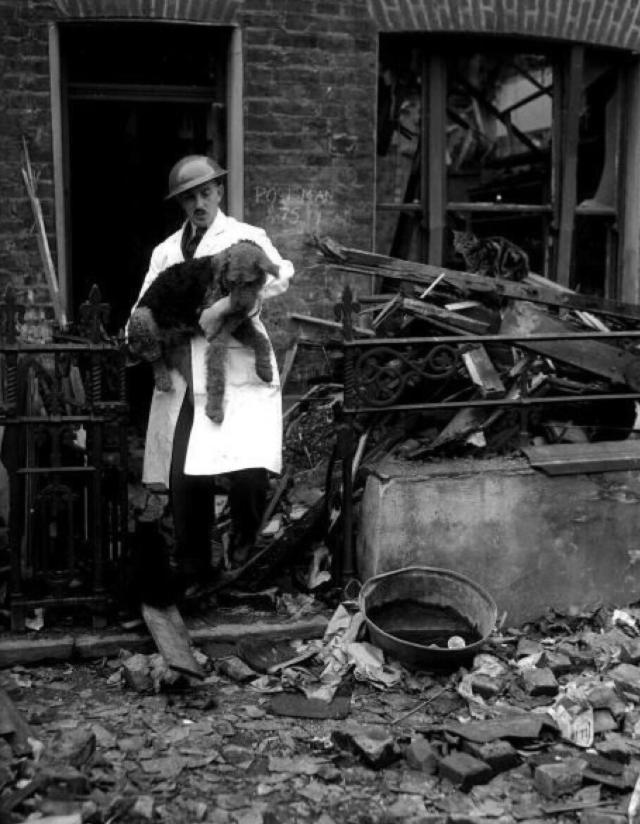 Vụ tàn sát thú cưng kinh hoàng nhất lịch sử nhân loại: 750.000 chó mèo bị lấy mạng vì 1 lý do ngu ngốc - Ảnh 7.