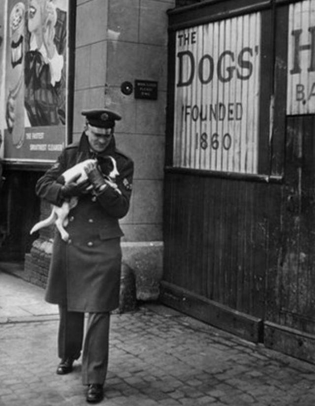 Vụ tàn sát thú cưng kinh hoàng nhất lịch sử nhân loại: 750.000 chó mèo bị lấy mạng vì 1 lý do ngu ngốc - Ảnh 8.
