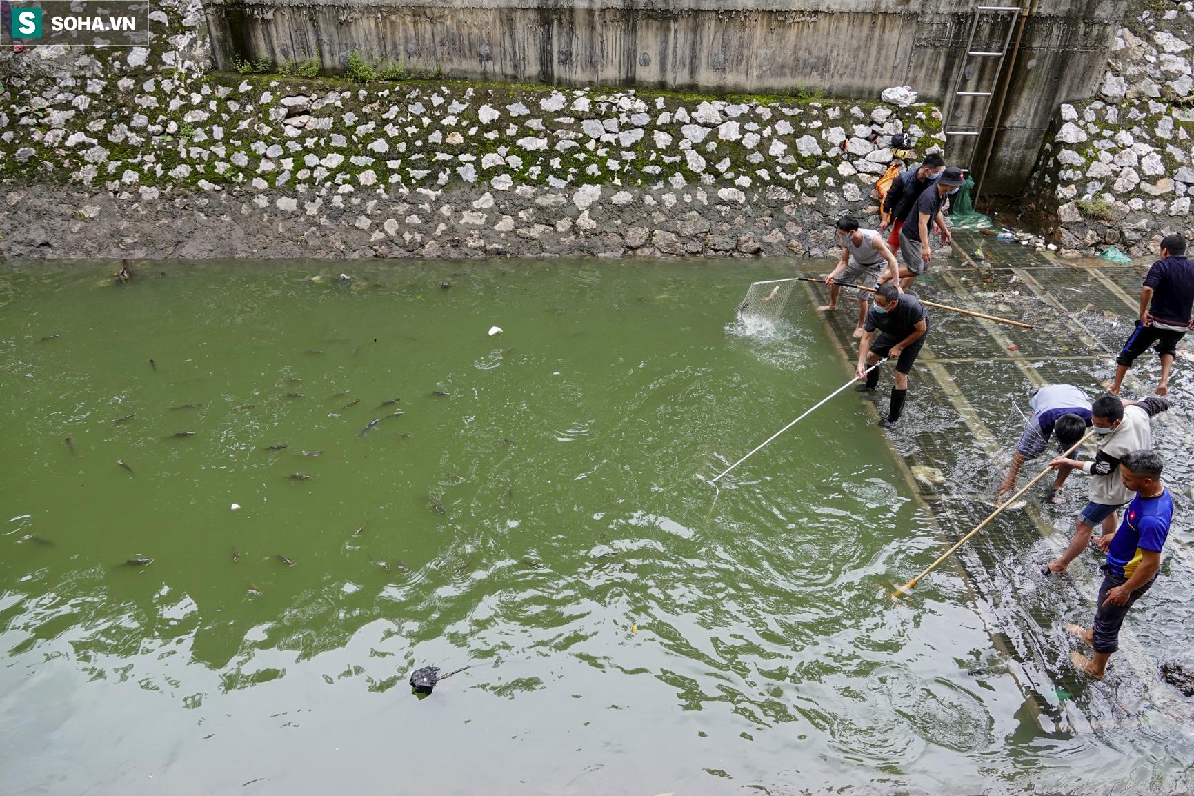 Nước sông Tô Lịch bỗng chuyển màu xanh ngắt hiếm thấy, người dân hân hoan bắt hàng tạ cá - Ảnh 7.