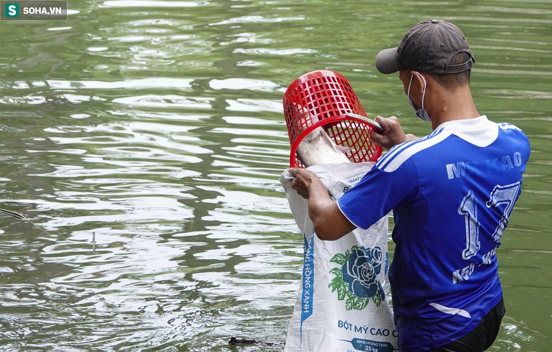 Nước sông Tô Lịch bỗng chuyển màu xanh ngắt hiếm thấy, người dân hân hoan bắt hàng tạ cá - Ảnh 9.