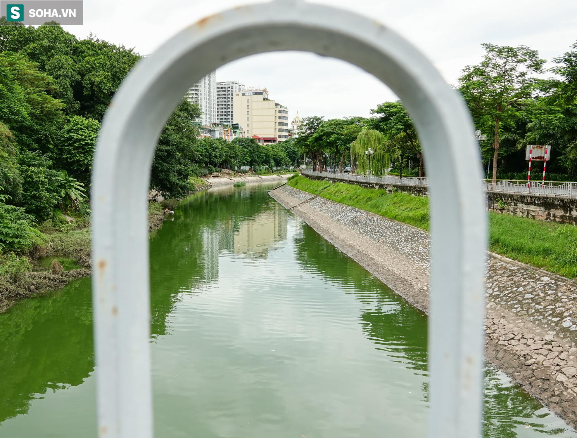 [ẢNH] Cận cảnh dòng nước xanh ngắt hiếm thấy tại sông Tô Lịch, cá bơi nhộn nhịp hàng đàn - Ảnh 7.