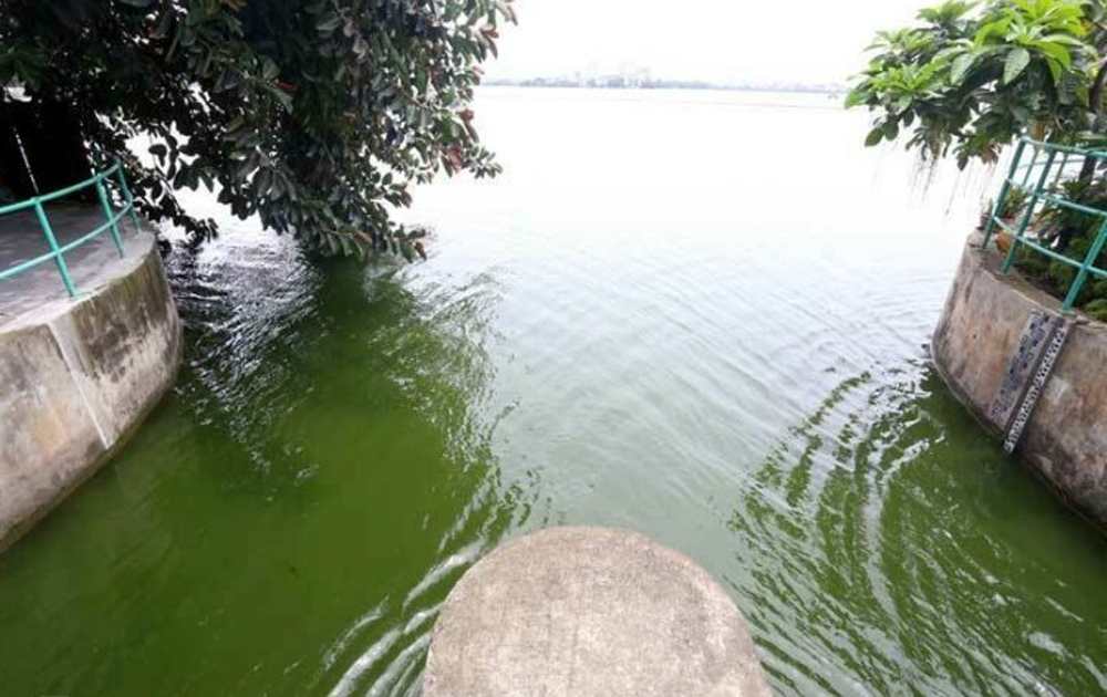 [ẢNH] Cận cảnh dòng nước xanh ngắt hiếm thấy tại sông Tô Lịch, cá bơi nhộn nhịp hàng đàn - Ảnh 5.
