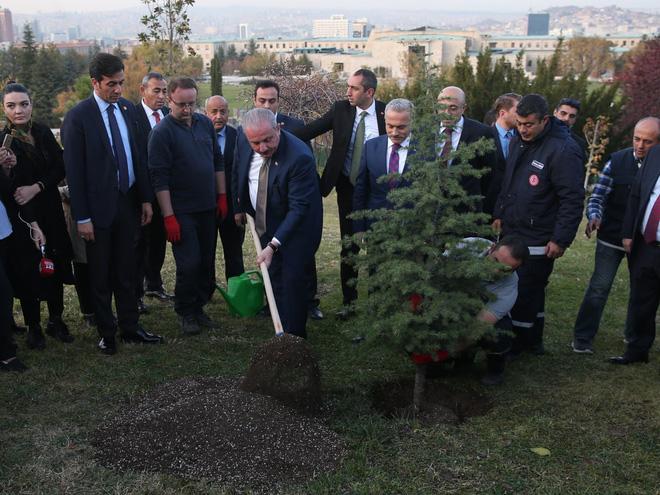 Năm 2019, Thổ Nhĩ Kỳ lập kỷ lục trồng mới 11 triệu cây xanh chỉ trong 1 ngày, số phận của chúng giờ ra sao? - Ảnh 1.