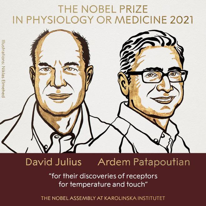 Chi tiết về Giải Nobel Y học 2021 vừa được trao: Hai nhà khoa học tìm ra các thụ thể giúp con người cảm nhận nhiệt độ và xúc giác - Ảnh 1.