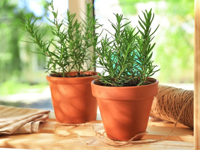 8 loài cây trồng trong nhà vừa đẹp vừa thơm, giúp đuổi muỗi hiệu quả mà không cần hóa chất - Ảnh 3.