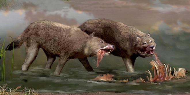 Giới nghiên cứu đã nhầm, Dire Wolves hoàn toàn không phải là sói - Ảnh 2.