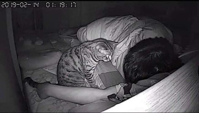 Thường thấy khó thở khi ngủ, chàng trai lắp camera liền bắt tại trận hành vi của mèo cưng nhưng thái độ của con vật sau đó còn buồn cười hơn - Ảnh 2.