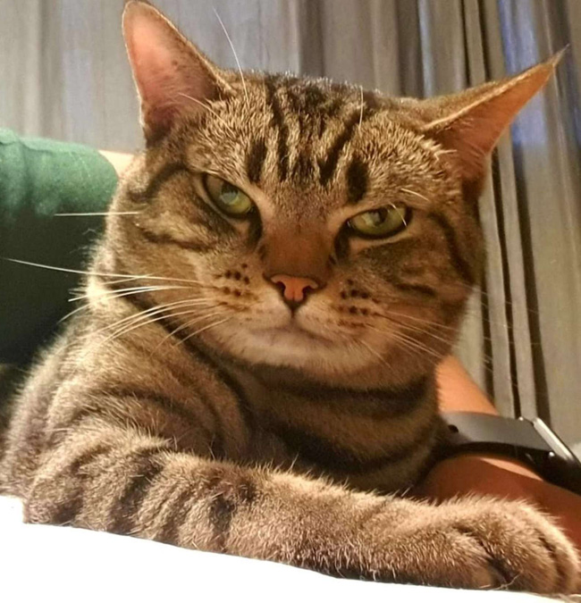 Thường thấy khó thở khi ngủ, chàng trai lắp camera liền bắt tại trận hành vi của mèo cưng nhưng thái độ của con vật sau đó còn buồn cười hơn - Ảnh 9.