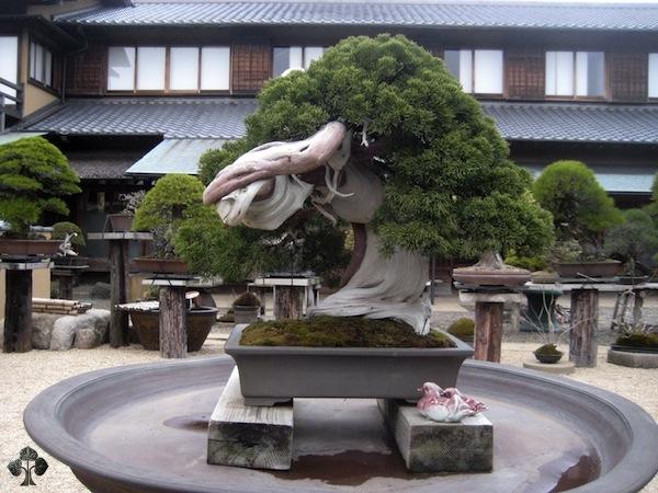 Top 10 cây Bonsai đẹp nhất thế giới - Ảnh 1.