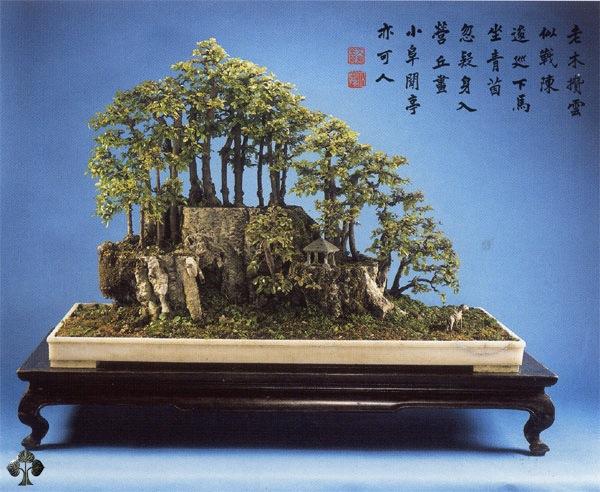 Top 10 cây Bonsai đẹp nhất thế giới - Ảnh 5.