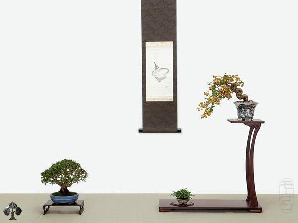 Top 10 cây Bonsai đẹp nhất thế giới - Ảnh 8.