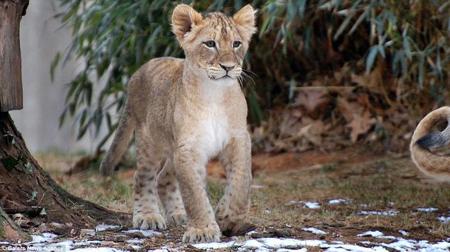 Bức ảnh chứng minh câu nói Nhà là phải có nóc của gia đình sư tử khiến dân mạng được phen cười nghiêng ngả còn chị em tâm đắc lắm! - Ảnh 5.