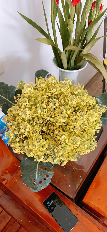 Khoe bó hoa rực rỡ chỉ đáng chục nghìn đồng, mẹ trẻ khiến tất thảy kinh ngạc vì nguồn gốc quên không xào thịt bò? - Ảnh 2.