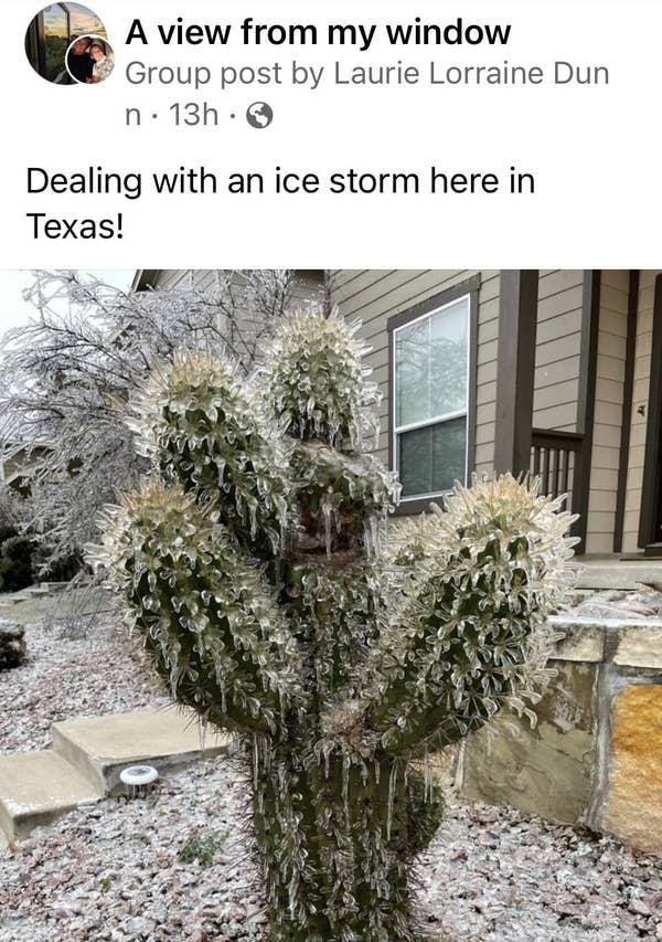 Loạt ảnh siêu thực về giá rét tại Texas: Bể cá hóa đá, tuyết rơi dày làm sập trần nhà - Ảnh 16.