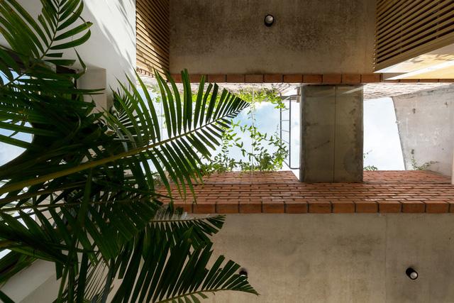 Ngôi nhà 64 m2 tại Hà Nội như một khu vườn với rau và cây ăn trái - Ảnh 7.