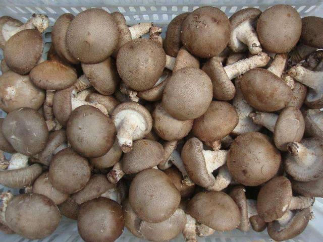 Bí quyết bảo quản các loại nấm để cả tháng vẫn tươi - Ảnh 1.