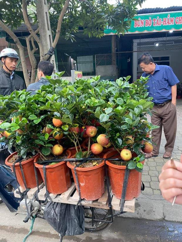 Gia đình bỏ hơn 1 triệu mua cây táo chơi Tết, 3 ngày sau cây nở ra… hoa dâm bụt - ảnh 2