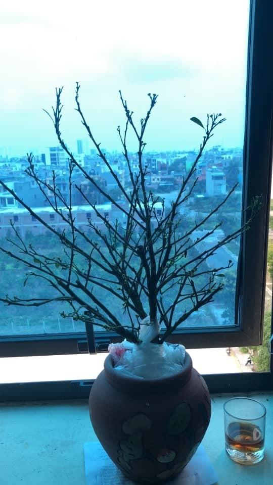 Những cây quất tàn tạ thê thảm sau Tết, chăm sóc phục hồi thế nào? - ảnh 6