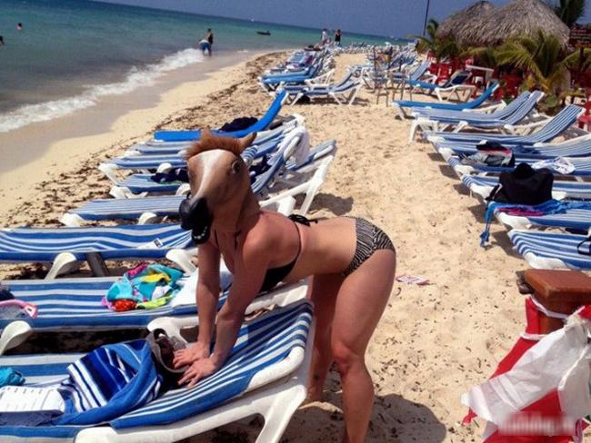 Ngựa nhà ai mà đi lạc ra bãi biển thế này?