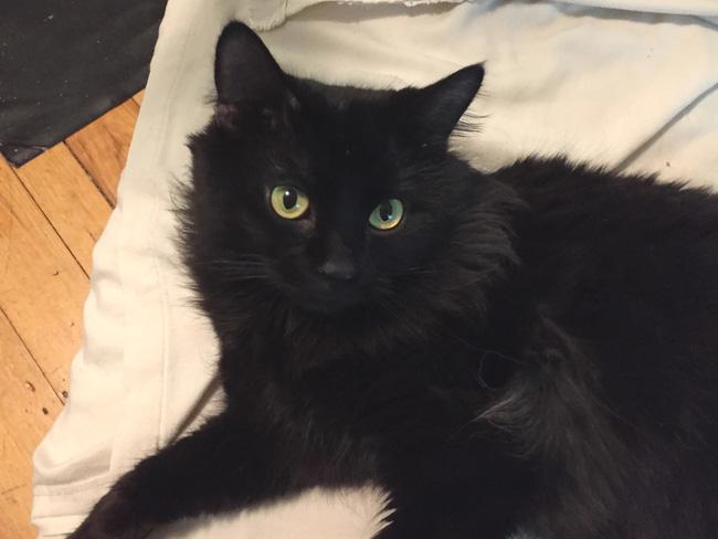 Mèo cưng biệt tăm biệt tích mấy tháng mới trở về, cô gái choáng váng với cảnh tượng trước mắt, không hiểu chuyện gì xảy ra - Ảnh 4.