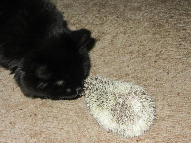 Mèo cưng biệt tăm biệt tích mấy tháng mới trở về, cô gái choáng váng với cảnh tượng trước mắt, không hiểu chuyện gì xảy ra - Ảnh 14.