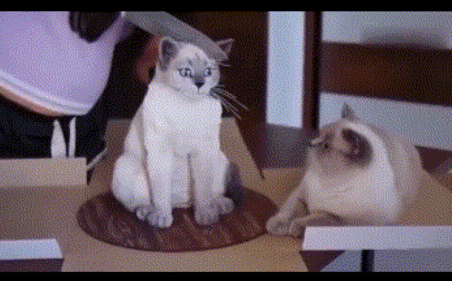 Chứng kiến bản sao bị xử trảm thẳng tay, biểu cảm của chú mèo khiến ai nhìn vào cũng không nhịn được cười - Ảnh 2.