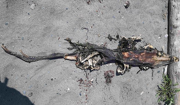 Thuỷ quái kỳ dị xuất hiện ở bờ biển Canada - Ảnh 1.