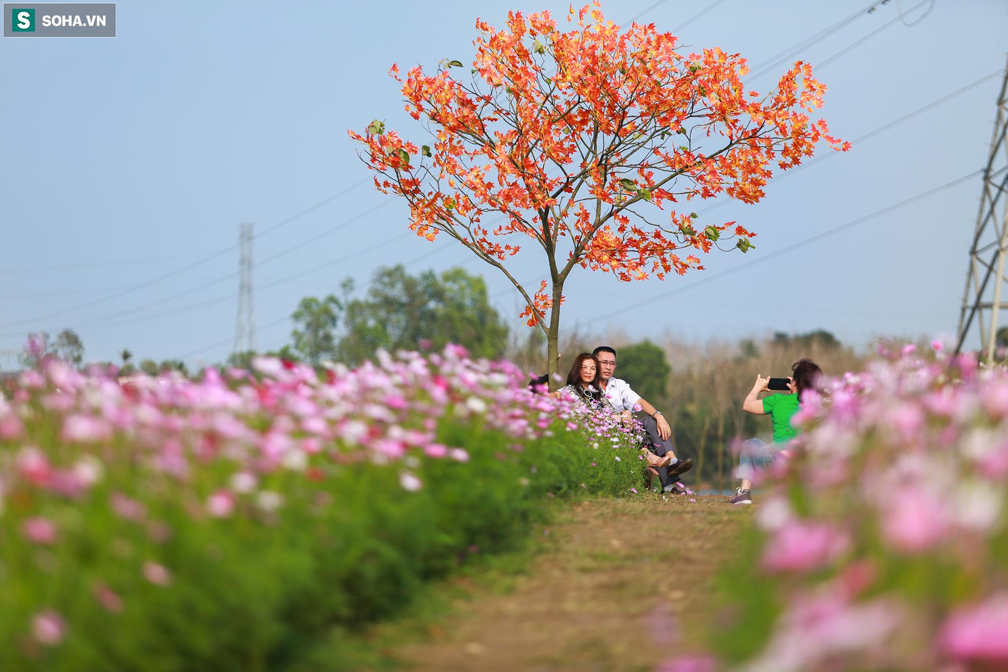 Mê mẩn cánh đồng hoa sao nhái đầy màu sắc được giới trẻ săn tìm để check-in ở Quảng Bình - Ảnh 11.