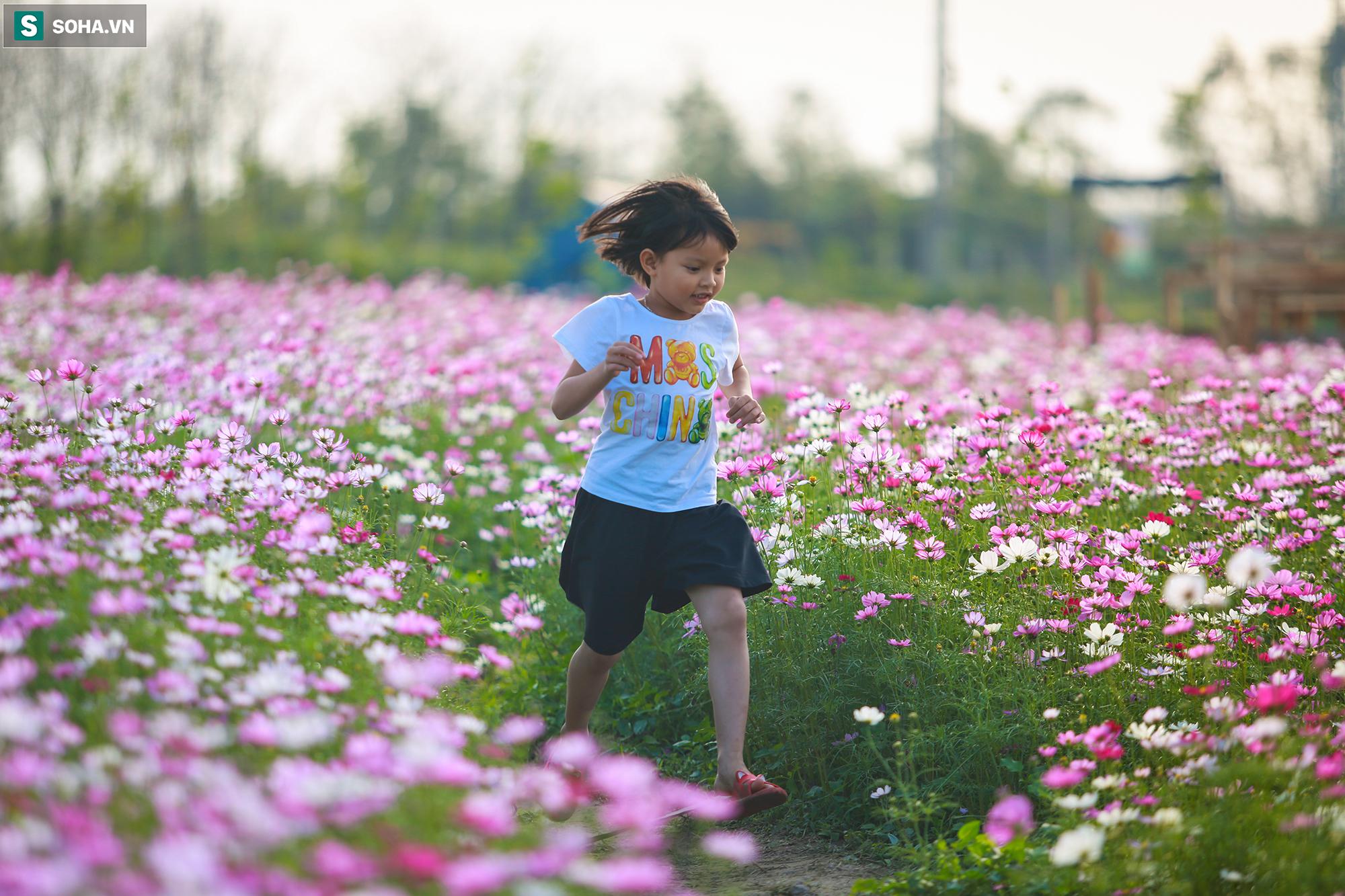 Mê mẩn cánh đồng hoa sao nhái đầy màu sắc được giới trẻ săn tìm để check-in ở Quảng Bình - Ảnh 14.