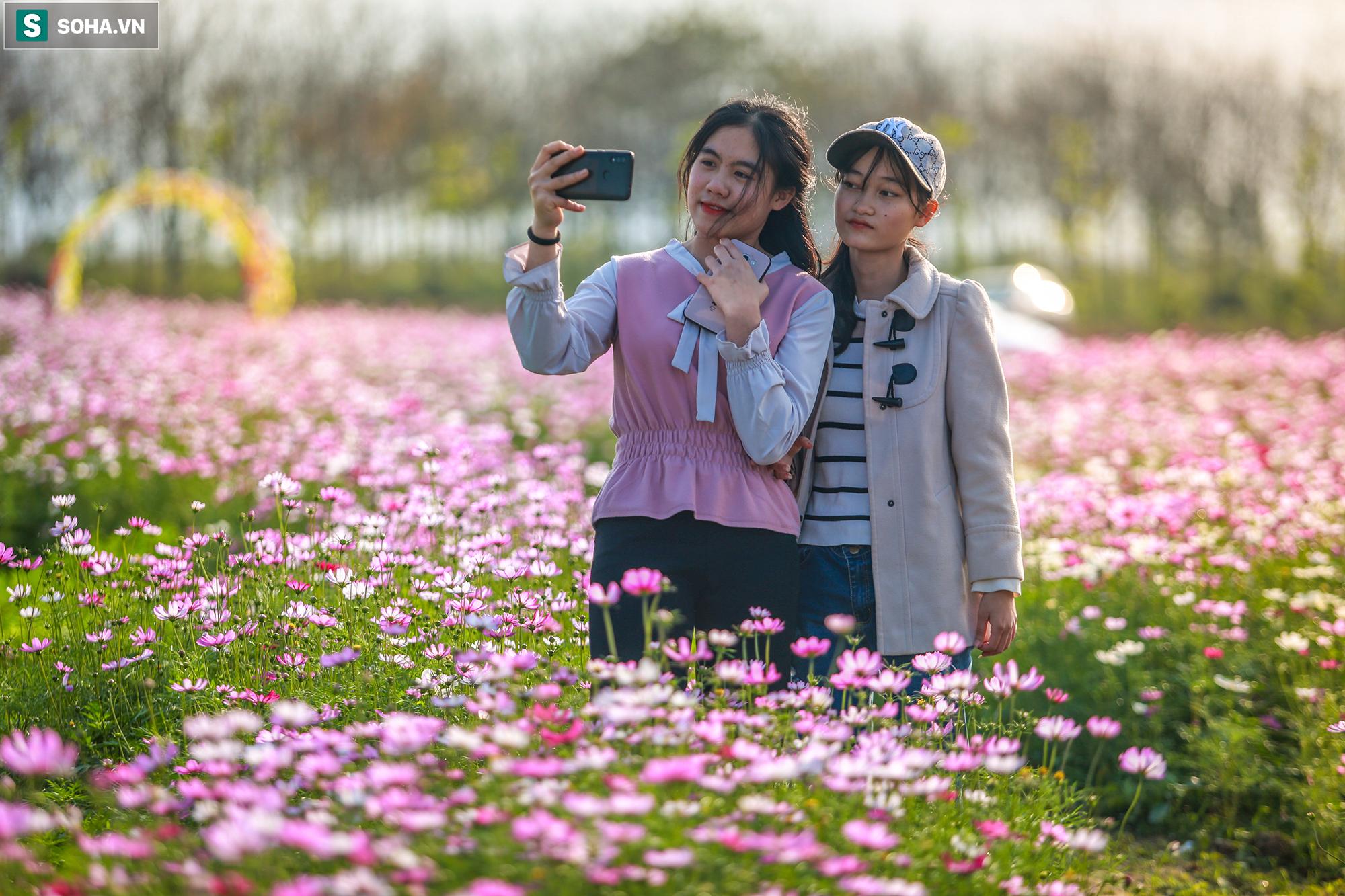 Mê mẩn cánh đồng hoa sao nhái đầy màu sắc được giới trẻ săn tìm để check-in ở Quảng Bình - Ảnh 9.