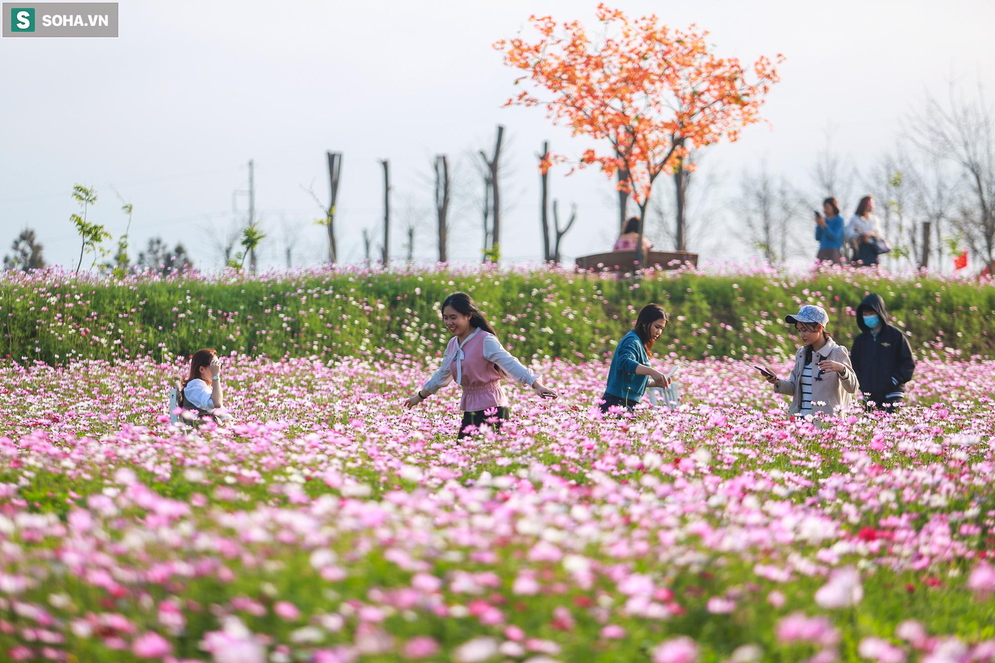Mê mẩn cánh đồng hoa sao nhái đầy màu sắc được giới trẻ săn tìm để check-in ở Quảng Bình - Ảnh 6.