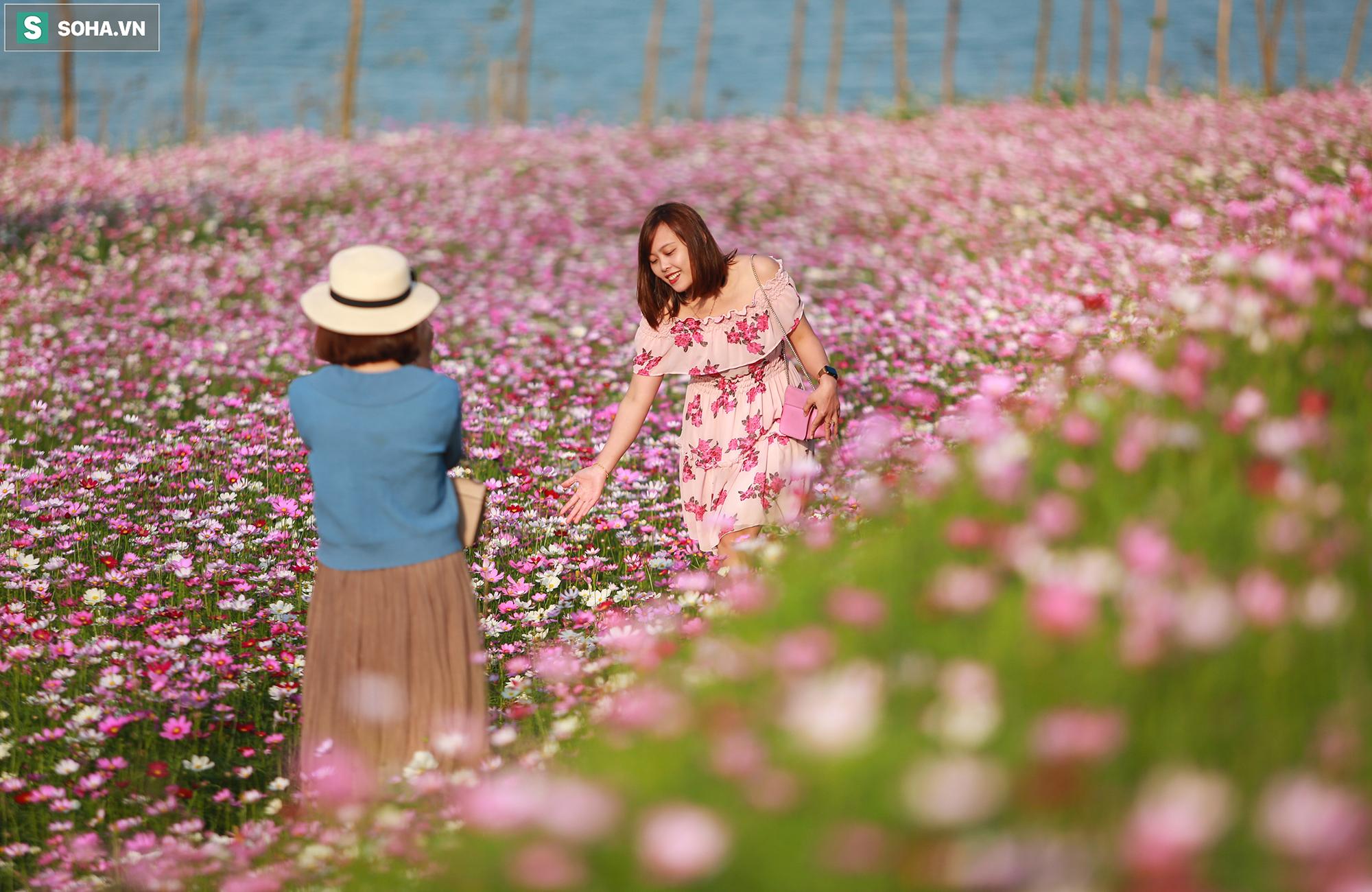 Mê mẩn cánh đồng hoa sao nhái đầy màu sắc được giới trẻ săn tìm để check-in ở Quảng Bình - Ảnh 10.