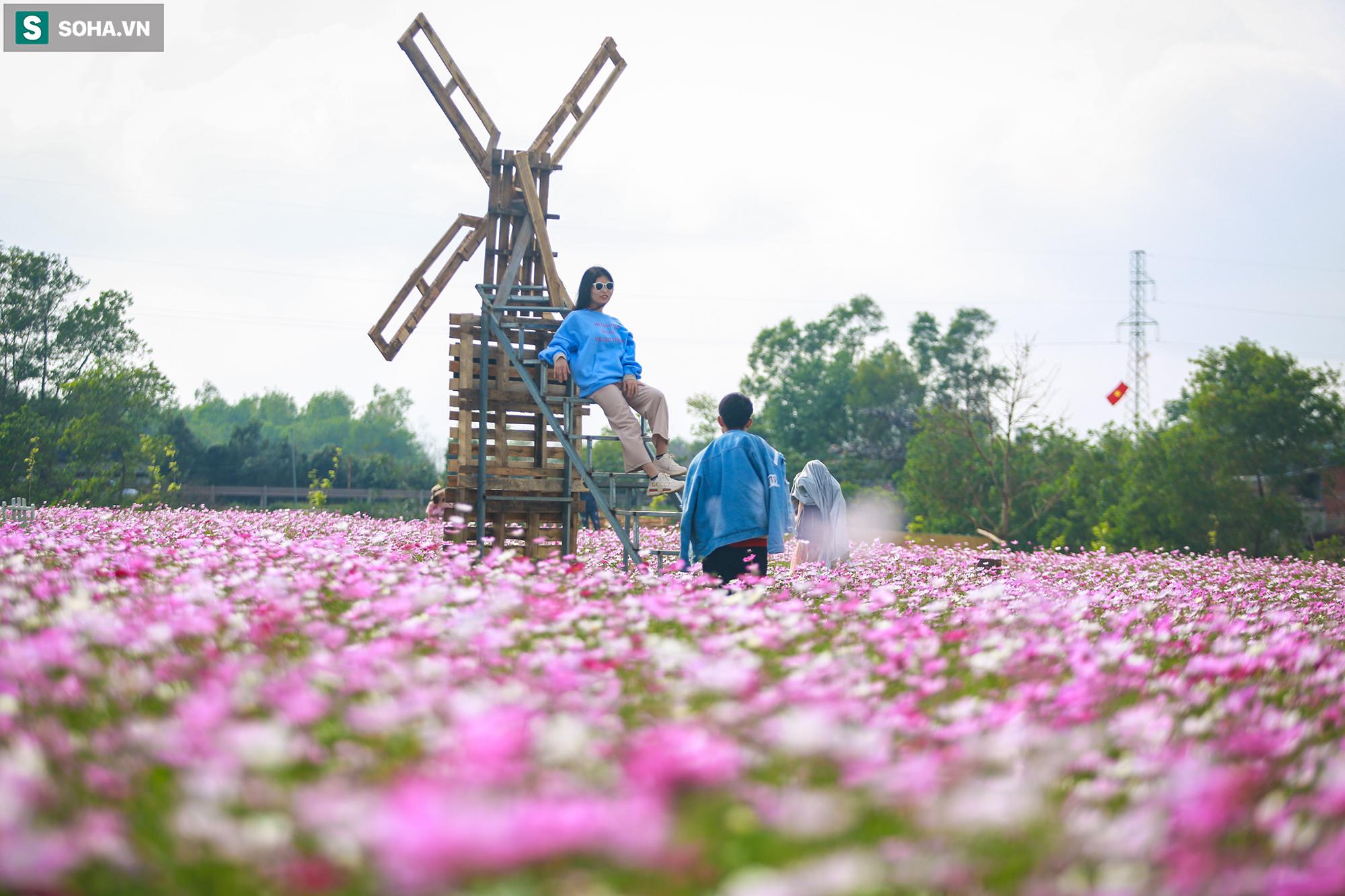 Mê mẩn cánh đồng hoa sao nhái đầy màu sắc được giới trẻ săn tìm để check-in ở Quảng Bình - Ảnh 8.
