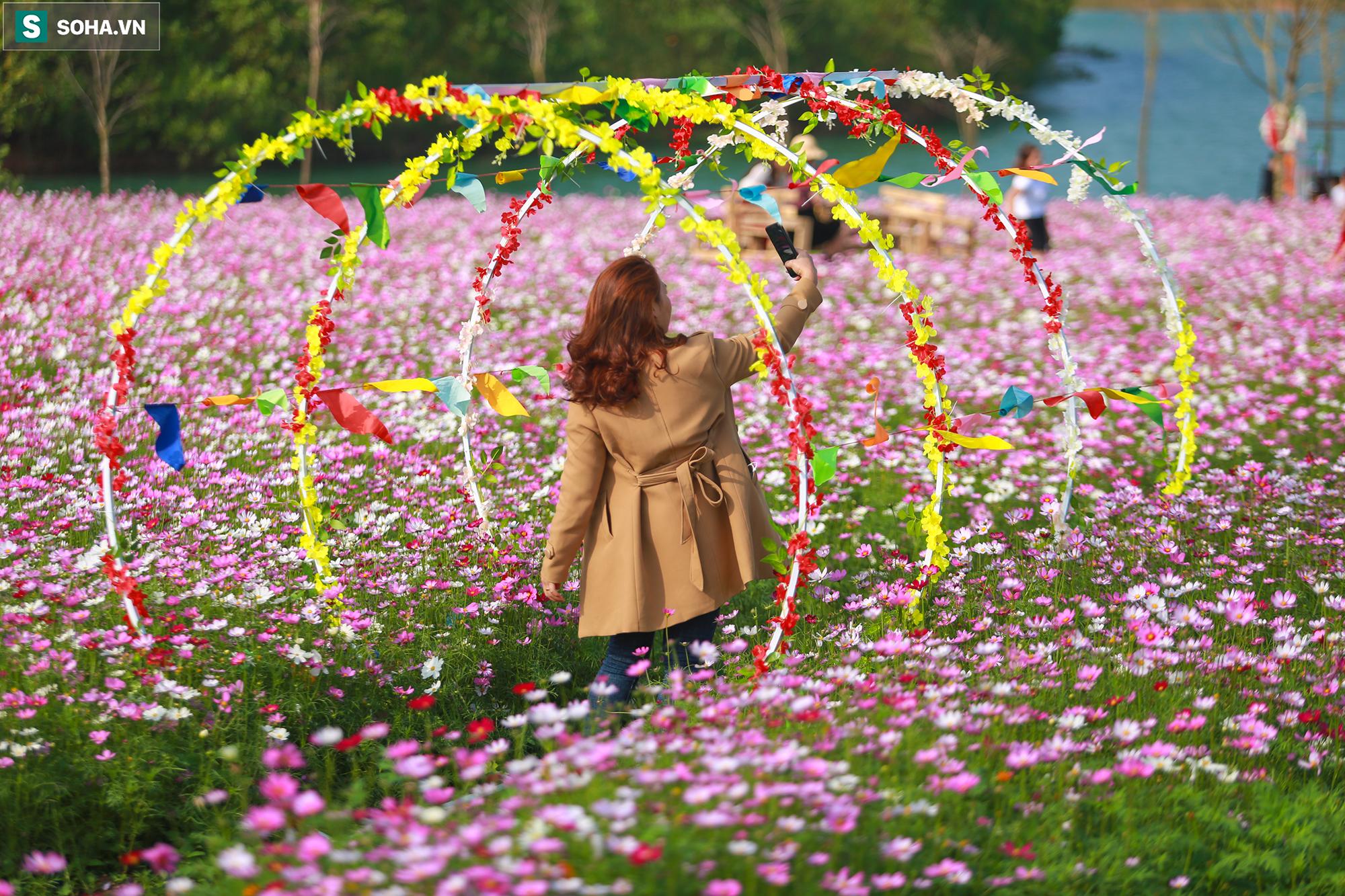 Mê mẩn cánh đồng hoa sao nhái đầy màu sắc được giới trẻ săn tìm để check-in ở Quảng Bình - Ảnh 12.