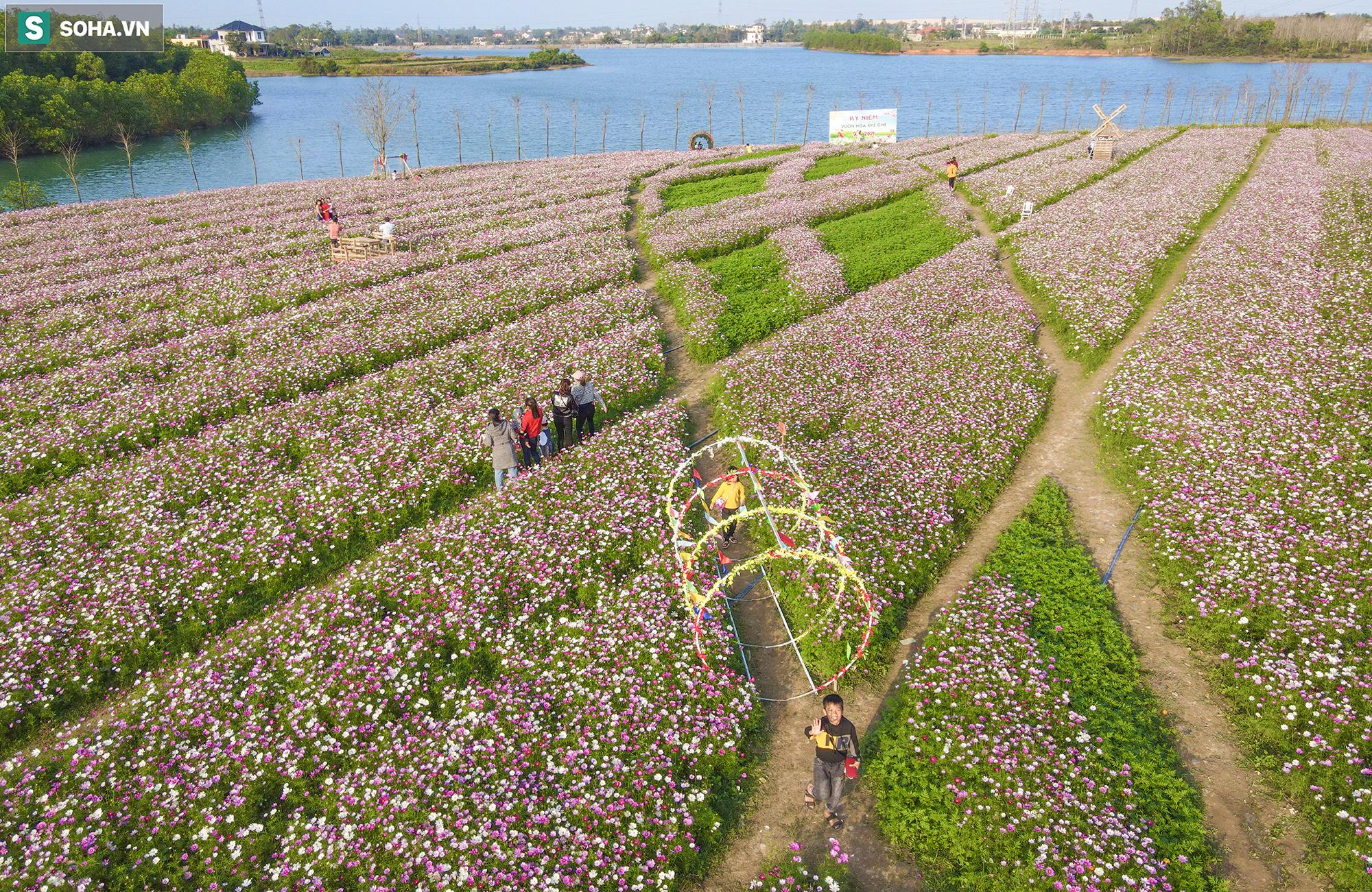 Mê mẩn cánh đồng hoa sao nhái đầy màu sắc được giới trẻ săn tìm để check-in ở Quảng Bình - Ảnh 16.