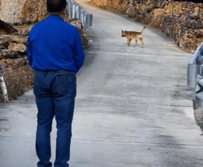 Xúc động khoảnh khắc chú chó già yếu từ biệt chủ trước khi rời nhà tìm nơi để... chết - Ảnh 3.