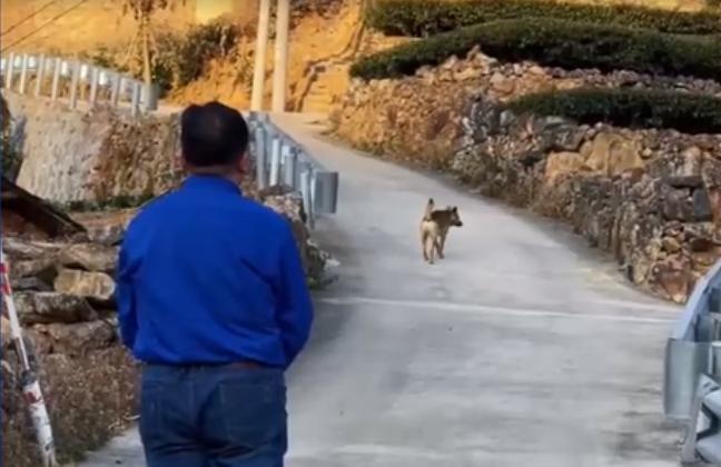 Xúc động khoảnh khắc chú chó già yếu từ biệt chủ trước khi rời nhà tìm nơi để... chết - Ảnh 4.
