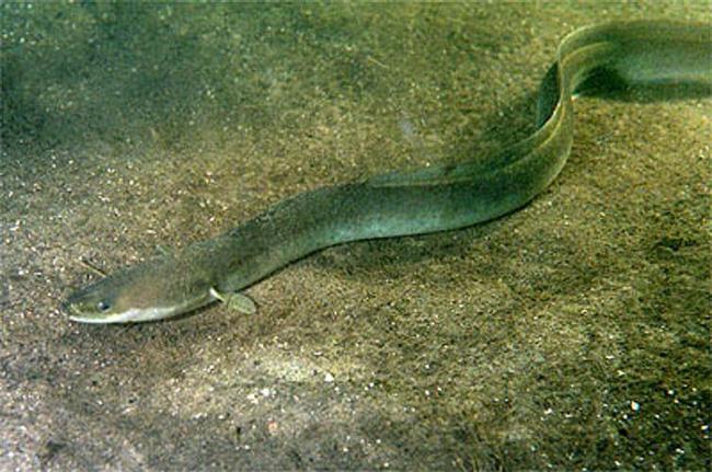 Quái vật bí ẩn nhất hành tinh ở hồ Loch Ness và sự thật - Ảnh 4.