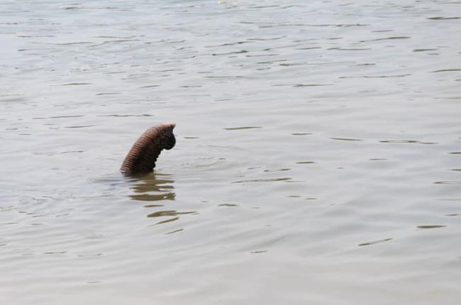 Quái vật bí ẩn nhất hành tinh ở hồ Loch Ness và sự thật - Ảnh 9.