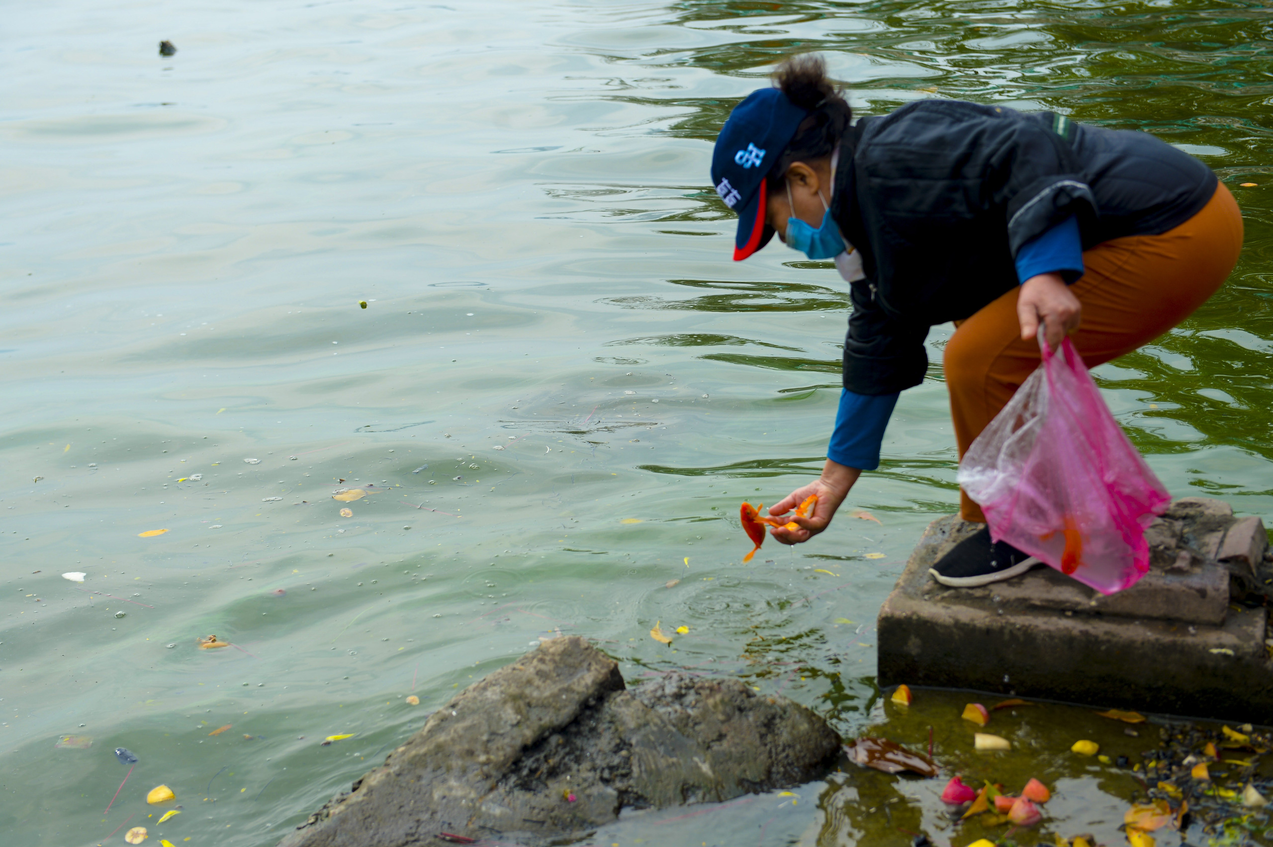 Người phụ nữ thả 3 con cá chép nặng gần 3kg xuống Hồ Tây tiễn ông Công, ông Táo về trời sớm - Ảnh 3.