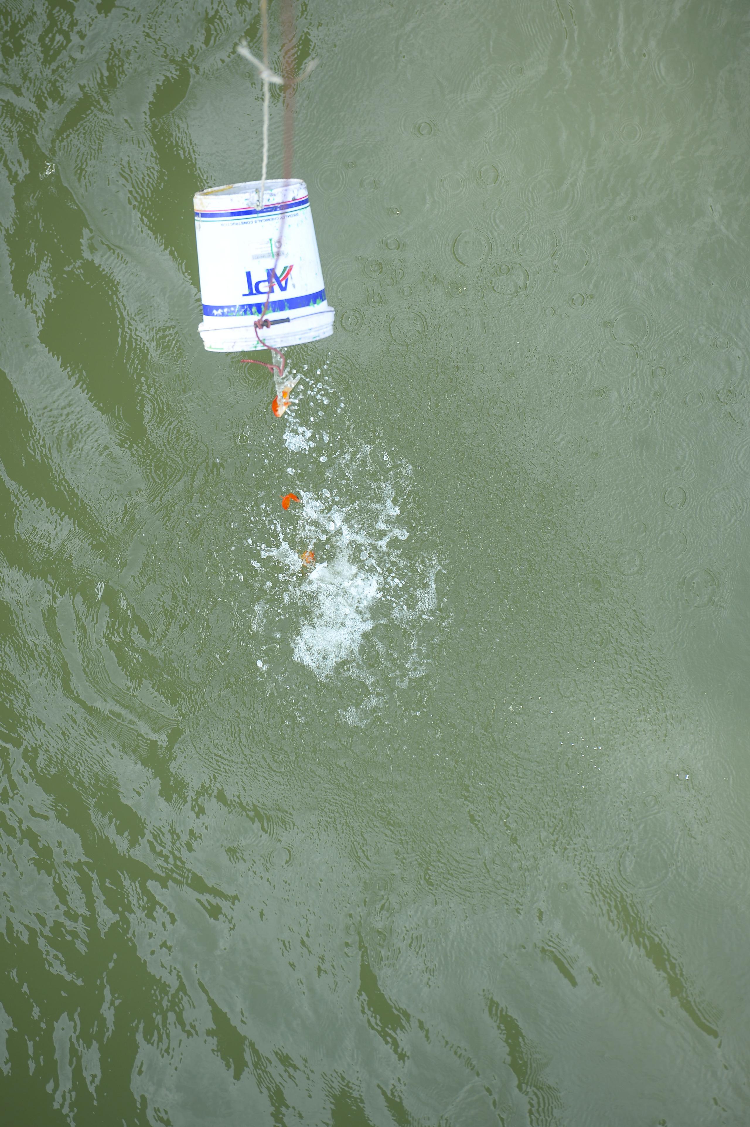 Người phụ nữ thả 3 con cá chép nặng gần 3kg xuống Hồ Tây tiễn ông Công, ông Táo về trời sớm - Ảnh 12.